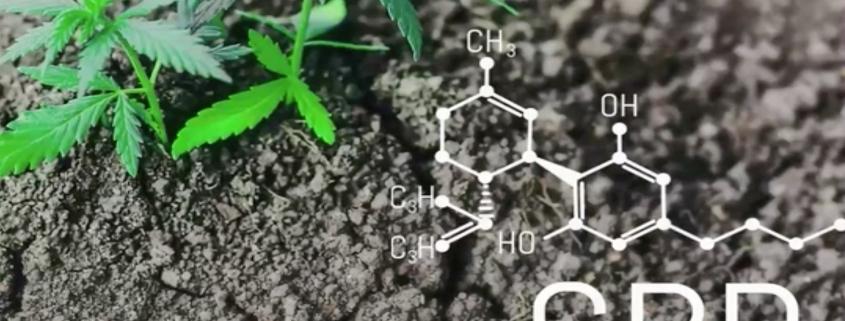 cbd-hemp-plant-garden-science