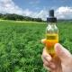 mend organic hemp extract in organic coconut oil